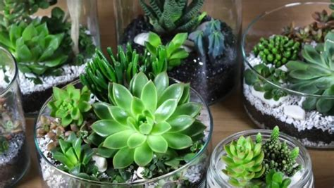 cuisine ikea montage diy vidéo décoration de succulente ikea