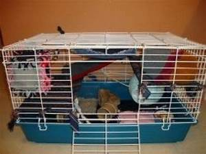 Simple and Easy Ways to Accessorize a Rat Cage | Discover ...