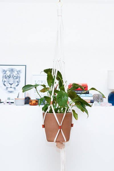 pflanzen zum aufhängen einrichtungsideen pflanzen aufh 228 ngen