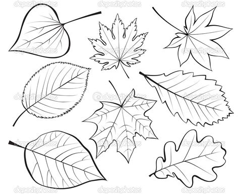 set  leaves stock vector  iarada  cards