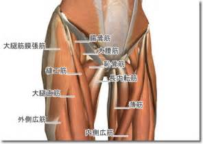 股関節 に対する画像結果