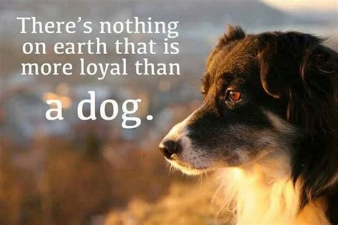 loyal dog loyalty dogs nothing than story border collie animal pure friend quotes animals king true evil forgiving fearless patient