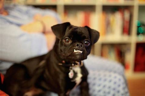 dogs  rock  underbite