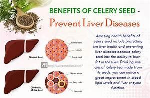 33 Amazing Health Benefits of Celery Seed