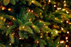 Pinecrest Christmas Tree Farm Westport Ma by No Plans The Preserve Has You Covered 12 21 12 28