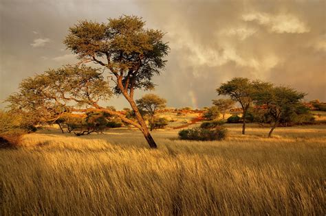 Landscape, Africa, Trees Wallpapers Hd  Desktop And