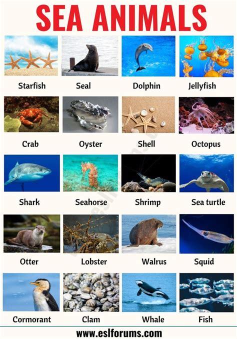 Meerestiere: Liste von 20+ interessanten Meerestieren mit