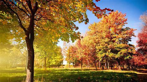 Oak Trees Wallpapers Download Oak Trees Hd Wallpapers For