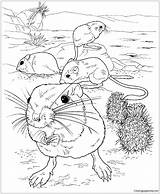 Kangaroo Coloring Rats Giant Desert Pages Printable Transformers sketch template
