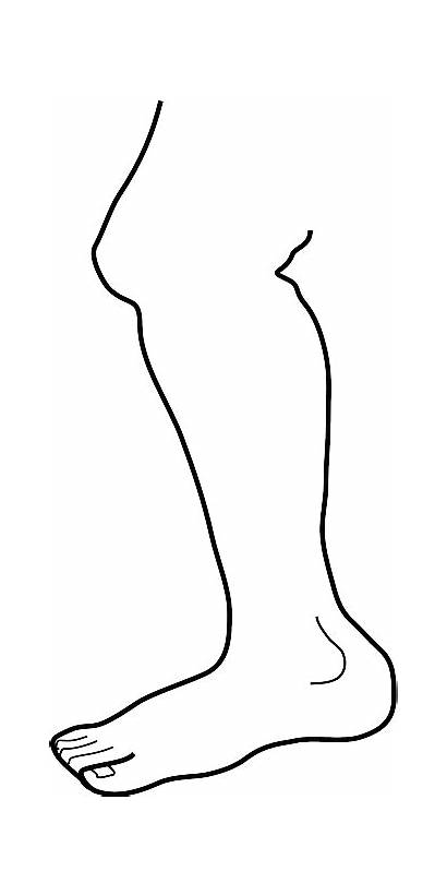 Outline Leg Legs Drawing Human Clip Foot