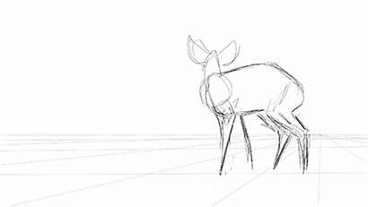 Animation Bongo Reference Drawing Anita Gaughan Antelope