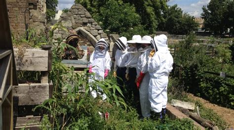 bee a beekeeper for a day with pearly queen co funzing
