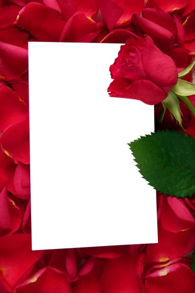 large transparent vertical frame  red roses rose