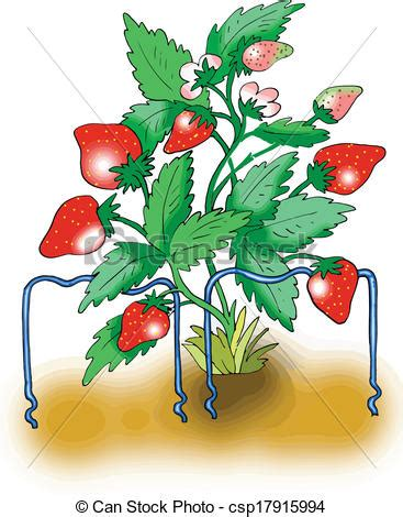 strawberry plants clipart clipground