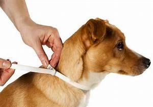 Puce De Chien : anti puce chien tous les traitements qui marchent ~ Melissatoandfro.com Idées de Décoration