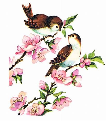 Bird Birds Clipart Clip Spring Collage Sheet