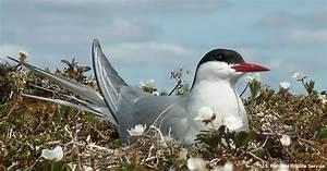 The Bird Is The Word | Alaska Wilderness League