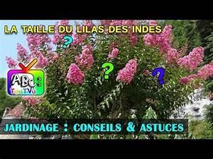 Taille Du Lilas Des Indes : la taille du lilas des indes youtube ~ Nature-et-papiers.com Idées de Décoration