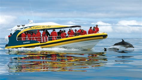 Yellow Cigarette Boat by Bruny Island Cruises