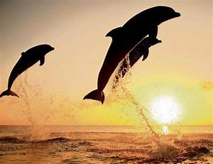 The 10 Rights for Dolphins as 'Non-Human Persons'   TakePart