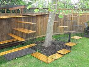 outside cat enclosure the cat bird conflict 171 aba