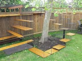outdoor cat enclosures the cat bird conflict 171 aba