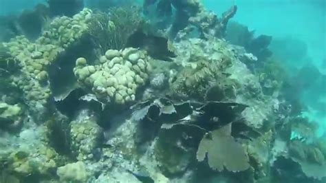 Honda Snorkeling by Snorkeling Bahia Honda Key