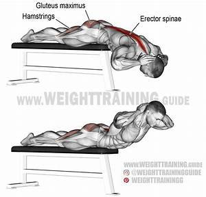 Flat Bench Hyperextension  A Compound Exercise  Target Muscle  Erector Spinae  Synergists