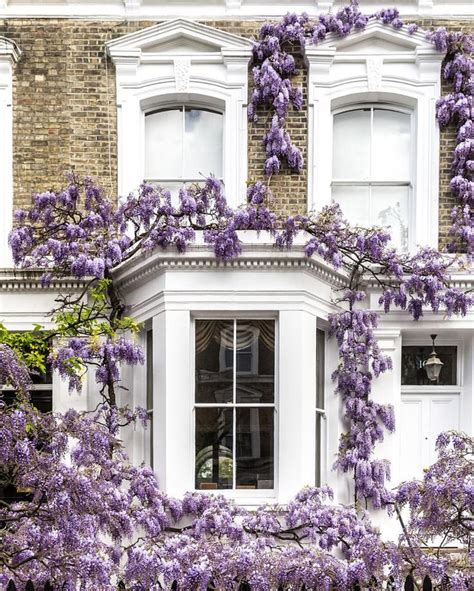 wisteria roots near house 25 best ideas about british isles on pinterest british isles travel england and wales and is