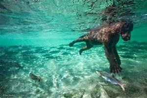 Beavering | Louis-Marie Préau | Underwater Worlds ...