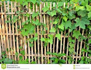 Couvert En Bambou : barri re en bambou entour e par couvert de lierre photo stock image 40934162 ~ Teatrodelosmanantiales.com Idées de Décoration