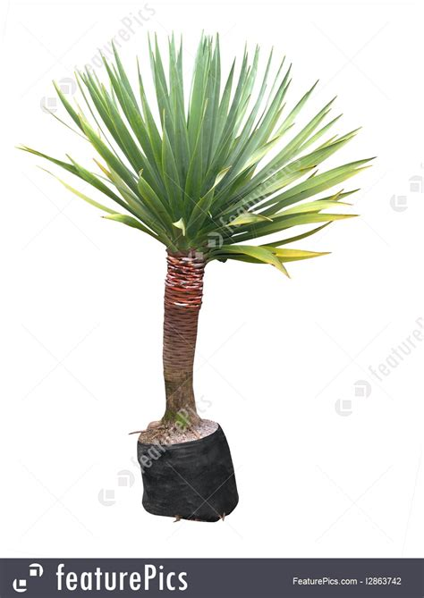 house plans yucca plant picture