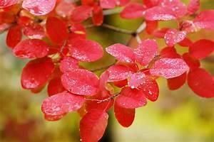 Pflanze Lila Blätter : kostenlose foto natur ast bl hen regen blatt blume lila bl tenblatt gasse rot ~ Eleganceandgraceweddings.com Haus und Dekorationen