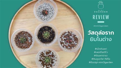 วิธีการขยายพันธุ์ กระบองเพชร (Cactus) ไม้อวบน้ำ - Mini3Garden