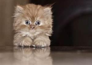 Surprised kitty is surprised.