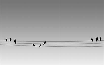 Birds Wire Bird Dimage Wallpapers Deviantart Eagles