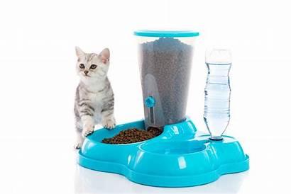 Cat Automatic Feeders Pet Dispenser Dog Feeder