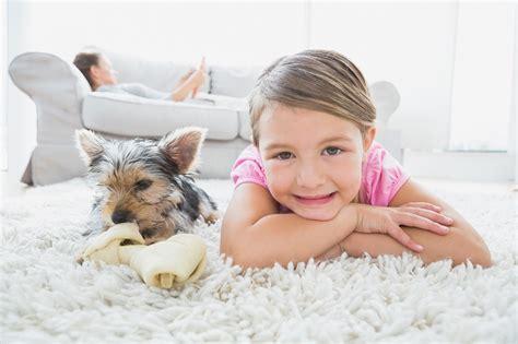 que faire mon chien a urin 233 sur mon tapis samson odeurs sp 233 cialit 233