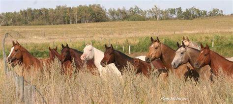 Canadian Quarter Horse Association - Canadian Quarter ...