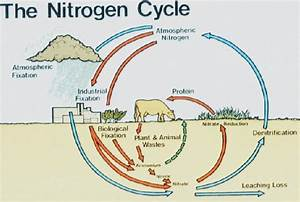 Domestication And Climate  Nitrogen Fertilisers And