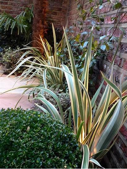 Low Maintenance Garden Designs Courtyard Planting Kensington