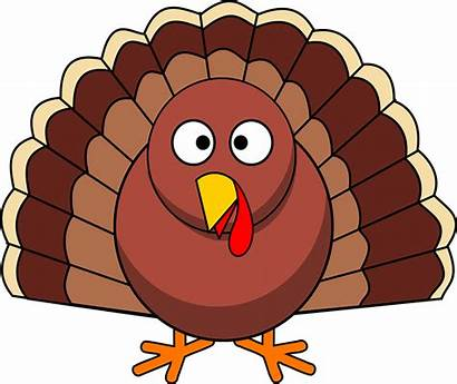 Turkey Thanksgiving Poultry Holiday Animal Graphic Vector