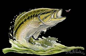 Largemouth Bass Wallpaper ·① WallpaperTag