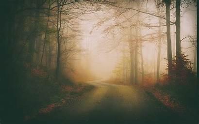 Dark Fall Forest Leaves Nature Road Landscape