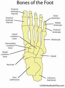 Meet Your Feet   Triadfoot Com  Triadfooteducates