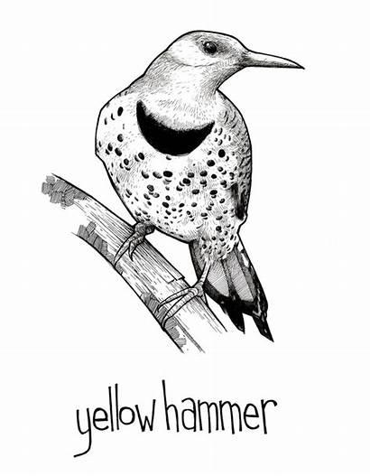 Yellowhammer Bird Illustration