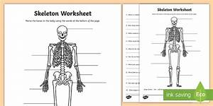 Parts Of The Human Skeleton Worksheet - Science Resource