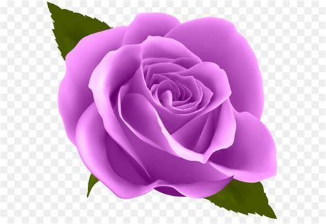 rose flower purple clip art purple rose png clip art