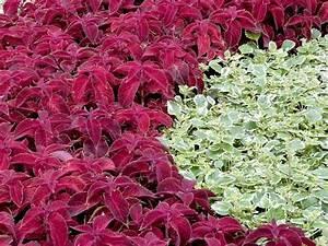Gartensträucher Blühend Winterhart : bodendecker bl hend und immergr n garten pinterest bodendecker garten und steingarten ~ Orissabook.com Haus und Dekorationen