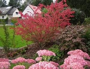 Pflanzen Für Trockene Schattige Standorte : sonniger und trockener standort ich ben tige mal wieder ~ Michelbontemps.com Haus und Dekorationen